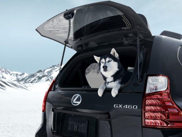 หัวใจใหม่สำหรับ Lexus GX? โตโยต้ายื่นจดเครื่องหมายการค้า GX550